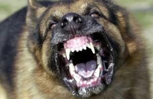 Police attack dog