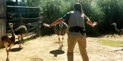 Santa Ana Zoo Jurassic Keeper