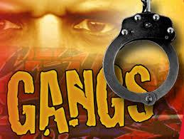Santa Ana Gang News
