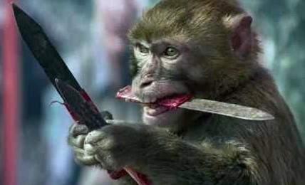 santa-ana-zoo-stabbing